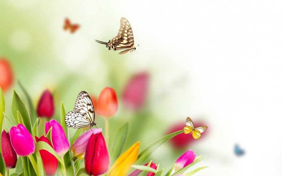 Spring Flowers And Butterflies Background Hd Monika Foltman